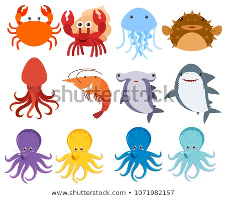 Sea Creatures on White Backgriund Stock photo © bluering