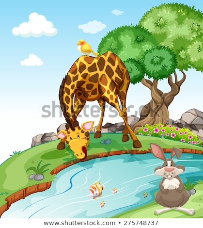 Giraffes on the river bank  Stock photo © liolle