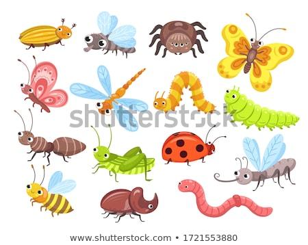 Aranyos színes bogarak kabalák kabala illusztráció Stock fotó © lenm