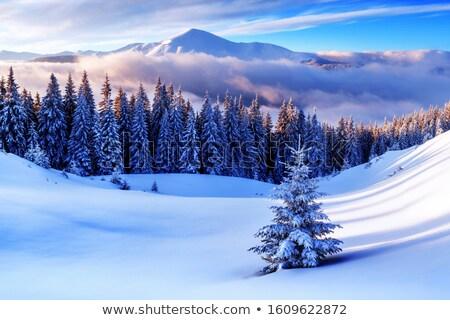 Kış manzara ağaçlar kar dağ Stok fotoğraf © Kotenko