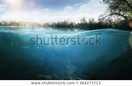 jelenet · vízalatti · illusztráció · hal · természet · háttér - stock fotó © colematt