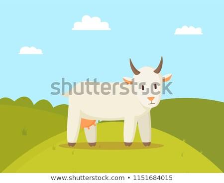 geit · afbeelding · gras · gebouw · kunst · dieren - stockfoto © robuart