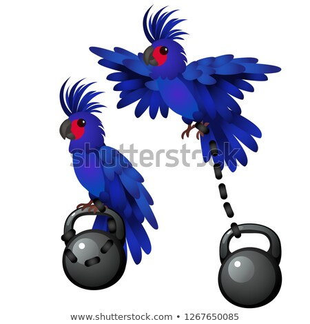 Blue parrot is tied to the weight isolated on white background. Vector cartoon close-up illustration Stock photo © Lady-Luck