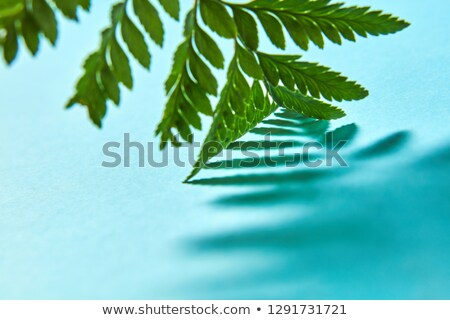 macro photo pattern from the shadows of a green leaf fern on a blue background with space for text stock photo © artjazz