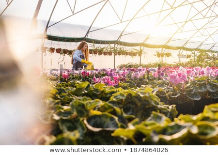 Woman gardener with water can working near flowers in greenhouse Stock photo © deandrobot