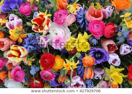 Stockfoto: Boeket · tulpen · narcissen · vers · roze · Geel