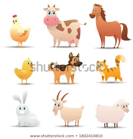 Stok fotoğraf: Farklılıklar · renk · kitap · çiftlik · koyun · siyah · beyaz