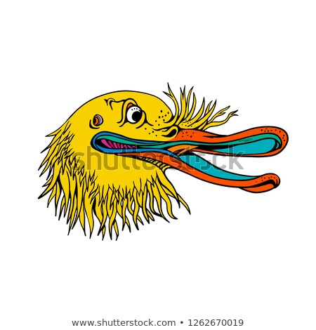 Aggressive kiwi Vogel Graffiti Farbe Stil Stock foto © patrimonio