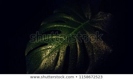 Abstrato água néon luzes elegante Foto stock © artjazz