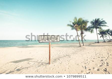 trottoir · plage · bois · passerelle · madère - photo stock © cienpies