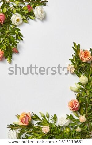 Cartão sempre-viva coral flores canto Foto stock © artjazz