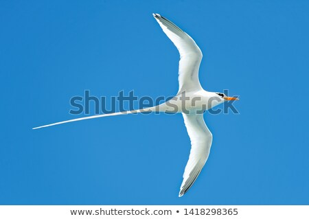 Longtail  Stock photo © timbrk