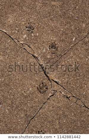 sidewalk with foot-step embedded in concrete Stock photo © Melvin07