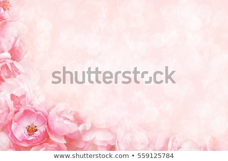 beige roses background stock photo © elenaphoto