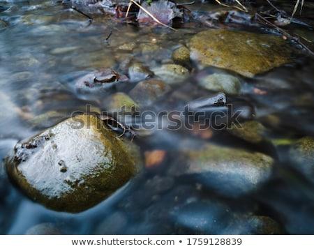 Burbling brook Stock photo © backyardproductions