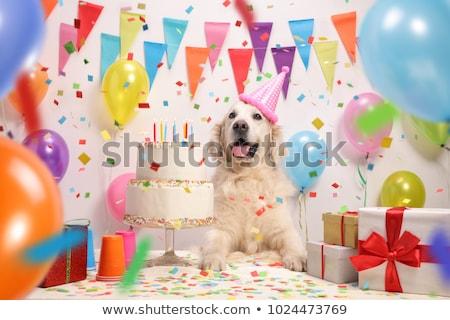 Fiesta perro sesión detrás torta cumpleanos Foto stock © Shevs