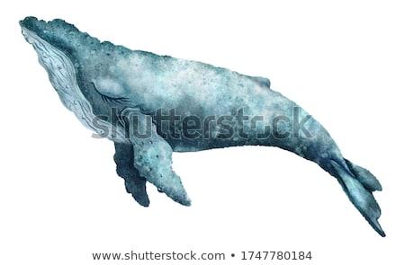 balena · cute · divertente · enorme · occhi · acqua - foto d'archivio © zsooofija