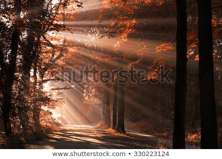 ahşap · sabah · bahar · orman - stok fotoğraf © smithore