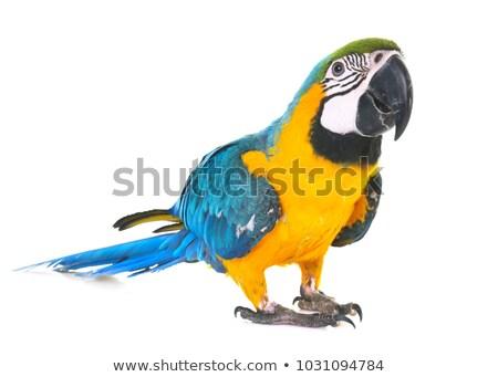 Stok fotoğraf: Yalıtılmış · renkli · beyaz · kuş · yeşil · mavi