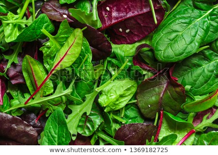 vegyes · saláta · étel · ebéd · diéta · hagyma - stock fotó © m-studio