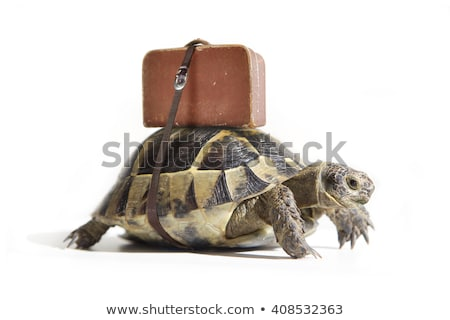 Funny turtle on journey Stock photo © dagadu