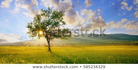Hdr landschap afbeelding mooie Schotland hemel Stockfoto © garethweeks