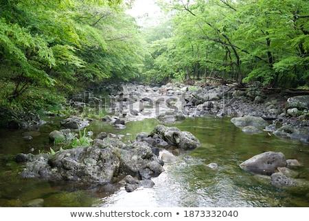 Rochas mata estrada montanha madeira floresta Foto stock © borysshevchuk