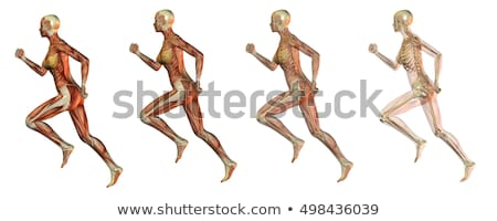 Skeleton running on a digital background Stock photo © wavebreak_media