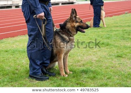 警察 · 綱 · 男性 · 犬 · 準備 - ストックフォト © 805promo