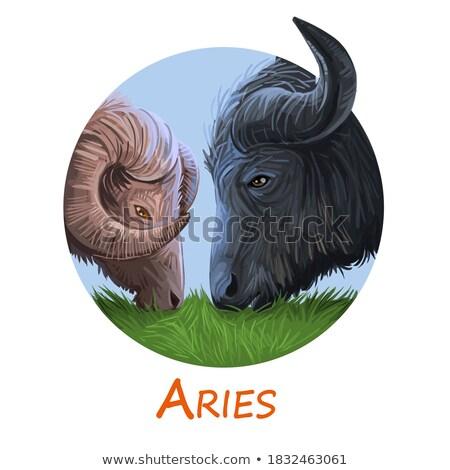 Kínai állatöv asztrológia ikon állat felirat Stock fotó © mintymilk