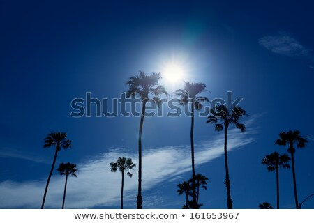 Palm trees in southern California Newport area Stock photo © lunamarina
