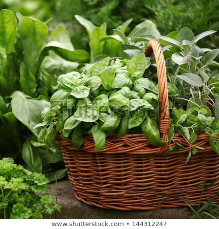 Basket with herbs Stock photo © MKucova