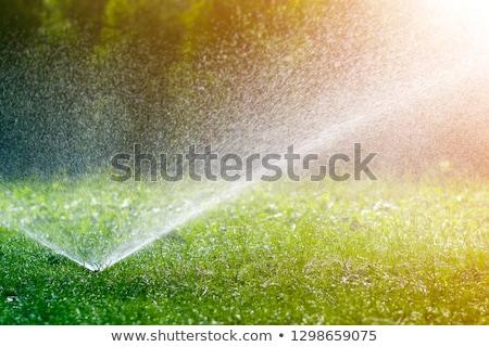 スプリンクラー · 自動 · 水まき · 草 · 日没 · 太陽 - ストックフォト © icefront