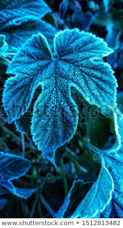 мороз · лист · аннотация · природы · снега - Сток-фото © stephaniefrey