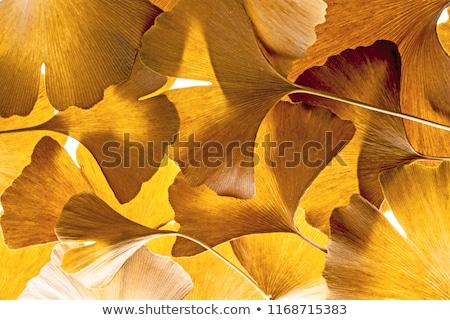 Amarelo folhas coberto neve árvore branco Foto stock © rglinsky77