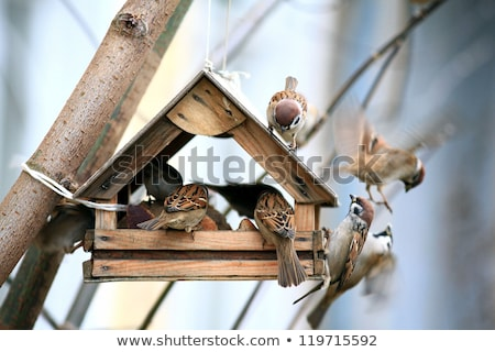 bird feeders. tree house for the birds,  Stock photo © alex_grichenko