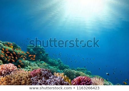 coral · fundo · mar · vermelho · areia · mergulho · praia - foto stock © thomaseder