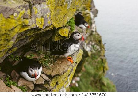 Bird Colony On The Seashore Stock photo © saddako2