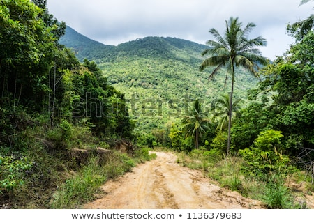 Dirt Road In Tropical Forest Stock photo © saddako2