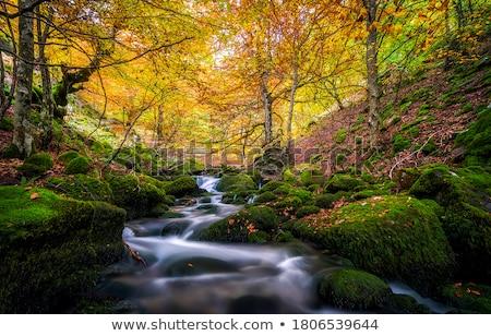 Arroyo pequeño primavera verde azul cascada Foto stock © LIstvan