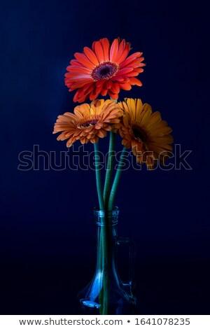 Center of a gerbera flower Stock photo © shihina