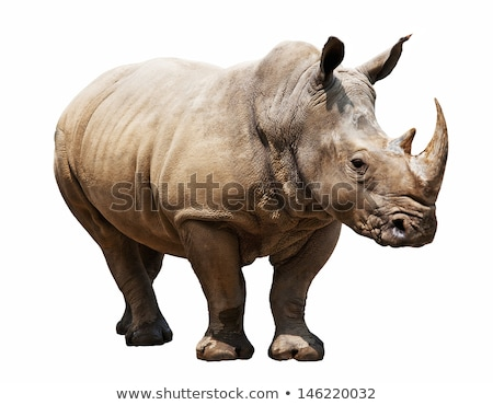 Rhino isolated Stock photo © tilo