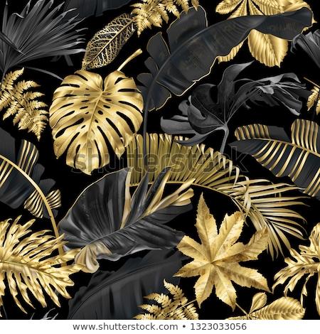 leaves on black stock photo © thp