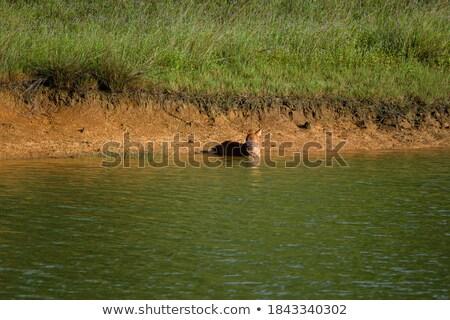 Сток-фото: природного · болото · Таиланд · пейзаж · фон · деревья