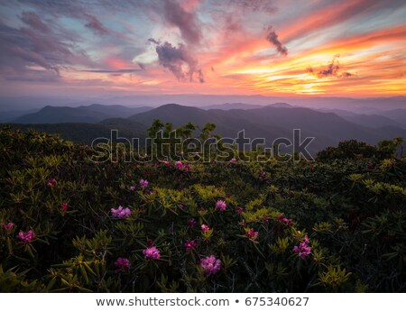 Blue Ridge Parkway Scenic Mountains Overlook Summer Landscape Stock photo © alex_grichenko