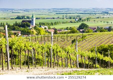 Vignoble baisser Autriche église Voyage Europe Photo stock © phbcz