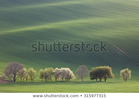 Narural minimalism  landscape of Green and Blossom Trees overloo Stock photo © Taiga