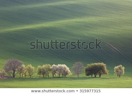 minimalismo · surpreendente · paisagem · sazonal · verde - foto stock © taiga