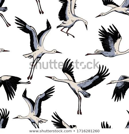 Gólya madár stock kép Stock fotó © Blackdiamond