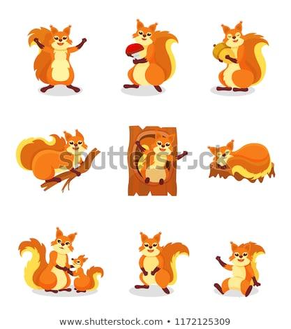 squirrel in action stock photo © jaffarali